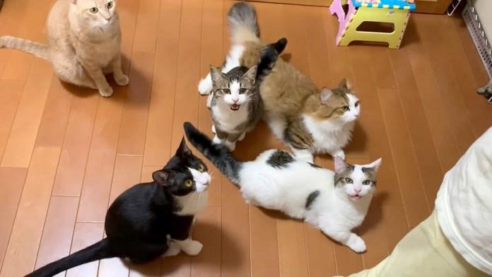 オヤツが食べたい猫達