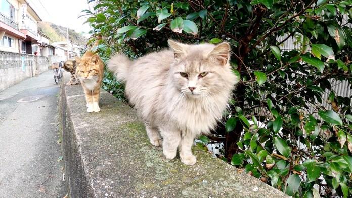 向かってくる猫達
