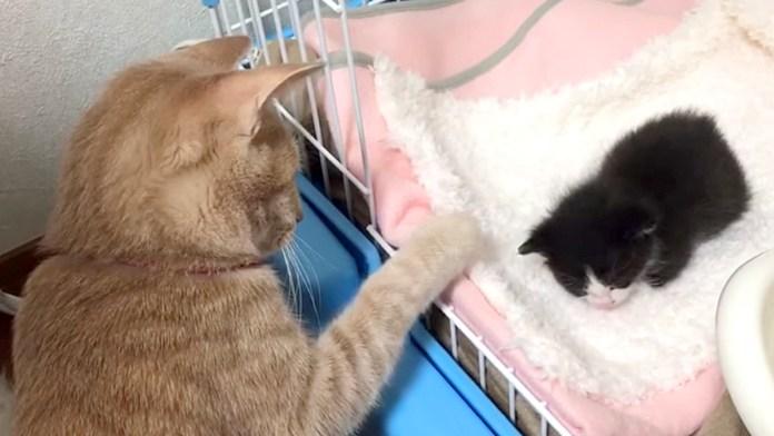 赤ちゃん猫が気になる子猫