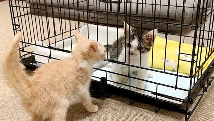 対面する子猫達