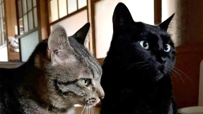 他人の身だしなみが気になる猫