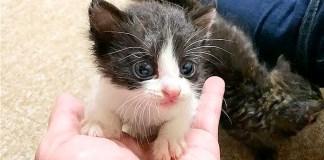 甘えてくる子猫