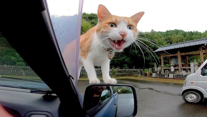 車に乗ってきた猫