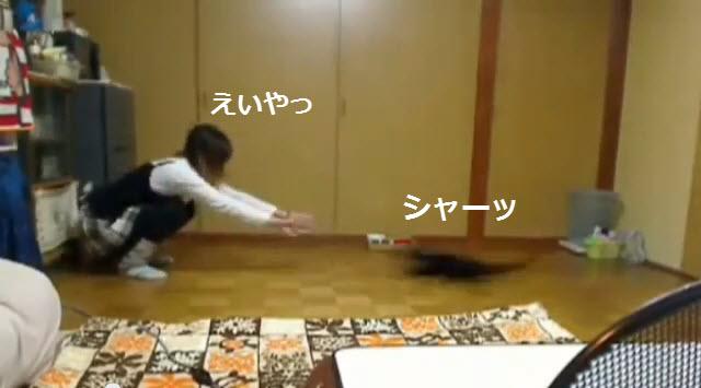 121223curling - 猫カーリングにご執心な黒猫と女の子(動画)