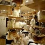 一軒丸ごと猫空間の「猫の家」がすごい
