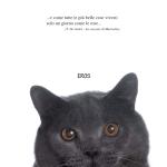 愛猫「Eros」の死を悼み、新聞に全面広告を出稿@イタリア