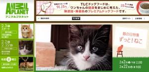 130130cat2 300x146 - ニャンコ三昧すぎる!2月22日の「猫の日」を前に、アニマルプラネット猫シフトが本気度合いを増す