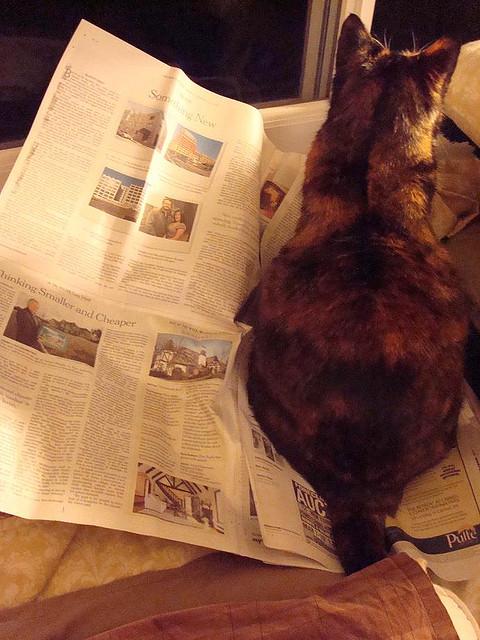 3293490120 e67a62cc90 z - どうして猫は新聞の上に乗っかるのか?(写真まとめ)