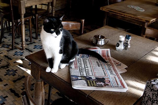 4286364096 7c85a02a61 z - どうして猫は新聞の上に乗っかるのか?(写真まとめ)
