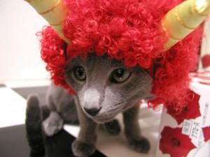 130201oni05 300x225 - とても外には追い出せない鬼猫コスプレ写真集