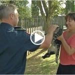 樹から降りられなくなった飼い猫の救出した消防士のコメントがかっこよすぎる