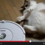 消極的にルンバと戦う猫(動画)