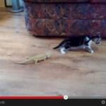トカゲの不意打ち(?)に、恐れおののきすぎる子猫(動画)