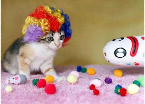 130517kityywigs01 600x430 - 猫のカツラ「Kitty Wig」新作写真