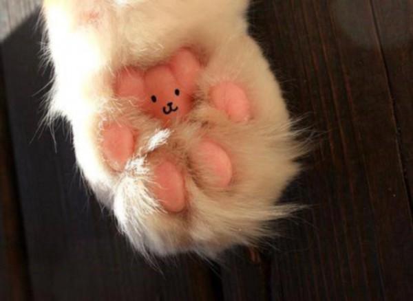 130519bearoncathand 600x438 - 猫の肉球の上に、テディベアが潜んでいたことが発覚