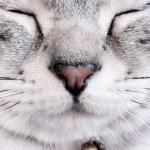 本日の美人猫vol.21