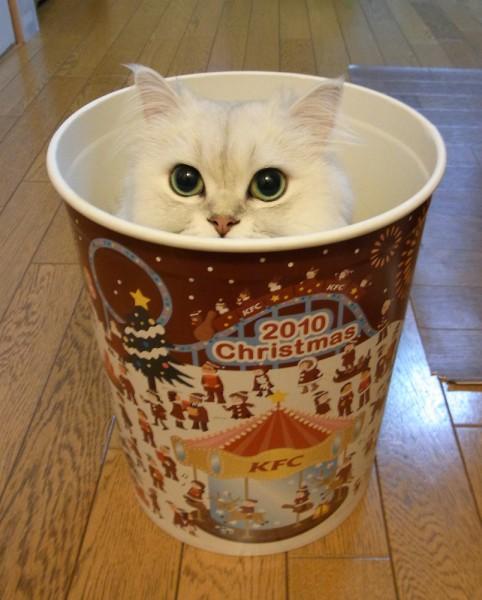 130624catbarrel02 482x600 - これはカワイイ新ジャンル!「猫バーレル」写真&動画