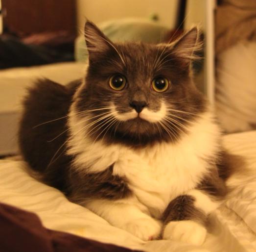 395686 596193120391428 752854771 n - またまた「王様ヒゲ」を持つ猫たち