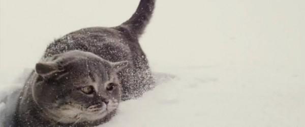 130709flyingcat 600x251 - 暑い日だから、雪に飛び込む猫の動画を