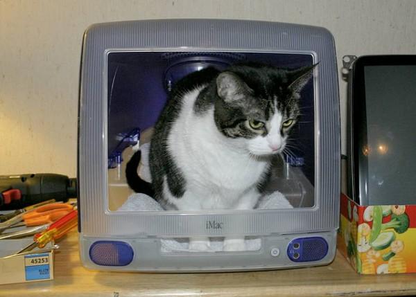 130711imaccat03 600x429 - 最初期のiMacは、猫ハウスに最適であると分かる写真まとめ