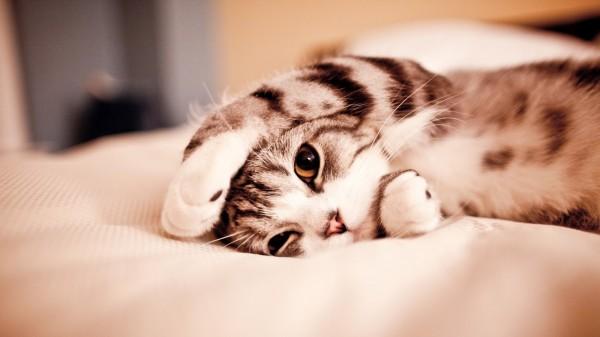 130722cat 600x337 - 本日の美人猫vol.26
