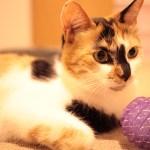 猫アレルギーの原因が特定された模様。新しい治療法や新薬開発に繋がるかも