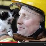 消防士に救出された猫のまとめ動画