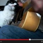 猫の前でギターを奏でるとこうなる(動画)
