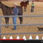 馬に果敢にも戦いを挑む、恐れを知らぬ猫(動画)