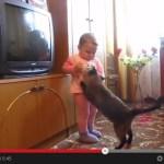 赤ん坊から子猫を取り戻す、母性にあふれる親猫(動画)