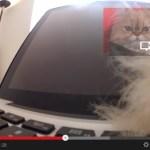 猫がGoogle Glassを装着したら、こうなる(動画)