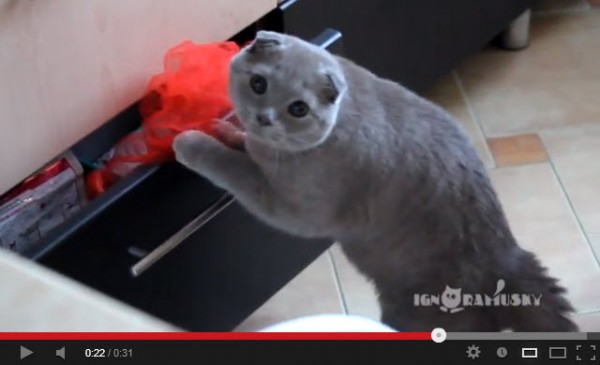 130824afraidcat 600x365 - イタズラ現場を発見されて、引き出しをそっと閉じる猫(動画)