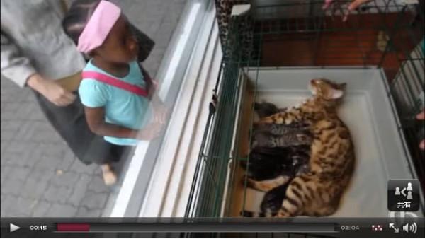 130827cat02 600x338 - カナダで「猫美容室」が大繁盛
