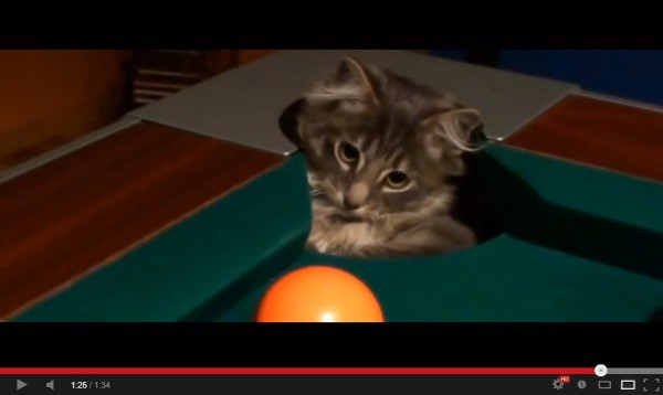 130904catbilliard 600x358 - ビリヤード台と猫との相性の良さが分かる動画集