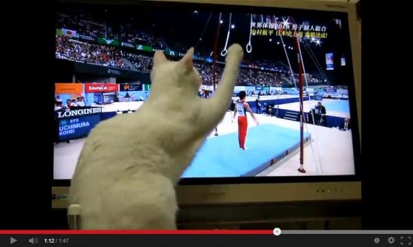 130913taisocat 600x358 - 体操に夢中な猫、肝心のシーンで画面を遮る(動画)