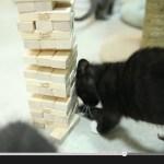 Jengaで遊ぶ猫、見事にピースを抜く