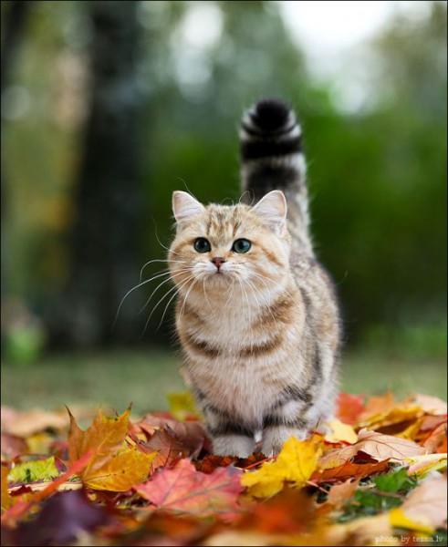 131007cat 491x600 - 本日の美人猫vol.37