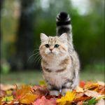 本日の美人猫vol.37