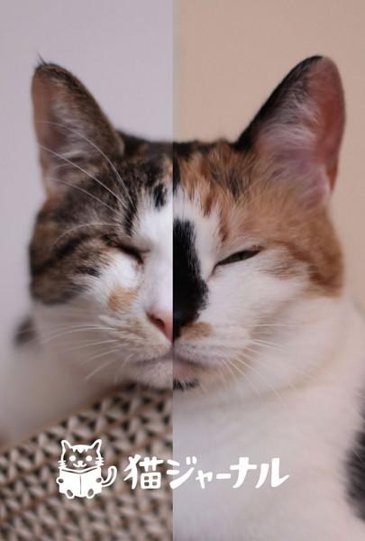 131009pennmeri 405x600 - 「ネコライオン」展っぽい写真を猫ジャーナルで作るとこうなる