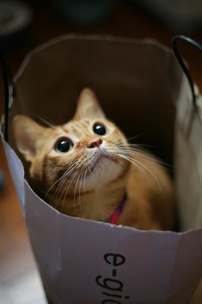 131015bijincat 400x600 - 本日の美人猫vol.38