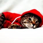 本日の美人猫vol.39
