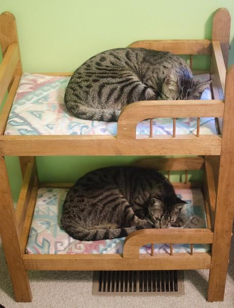 131020catbed 457x600 - 商品化が望まれるクオリティの猫専用2段ベッド