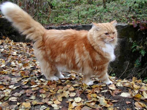 131021cat 600x450 - 本日の美人猫vol.40