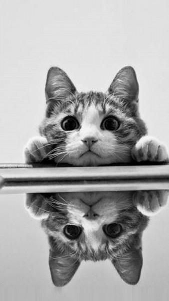 131026bijinnneko1 338x600 - 本日の美人猫vol.41