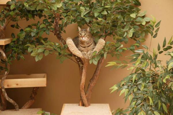 131026cattreehouse02 - 観葉植物にもなるかもしれない、屋内用の猫ツリーハウス