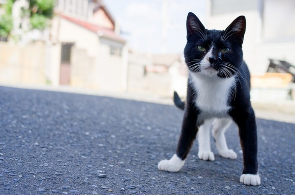 131102catisland 600x398 - 日本の「猫島」探訪:石巻市・田代島