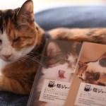 猫ジャーナル謹製のポストカードセット、吉祥寺のギャラリー「イロ」にて配布中