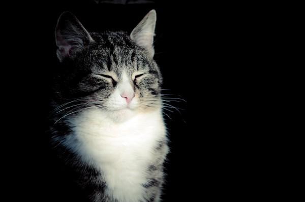 131110cat03 600x398 - 本日の美人猫vol.44