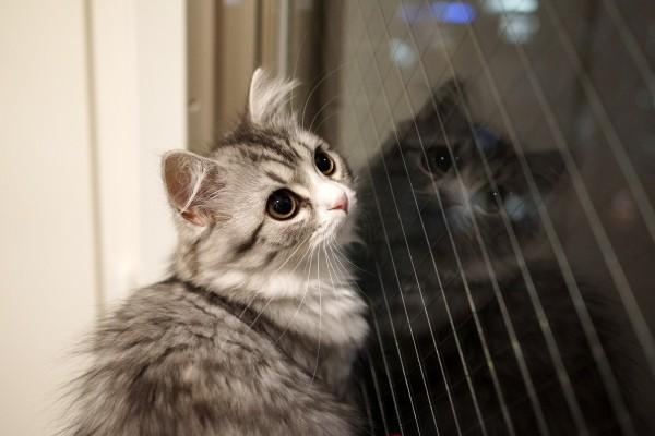 131110cat eve 600x400 - 本日の美人猫vol.42