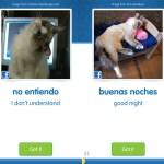 猫写真で外国語を習得するアプリ『CatAcademy』。まずは英語&スペイン語版で